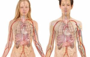 Como cuidar bem dos rins