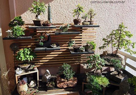 Jardim de bonsais, como cuidar de Bonsai