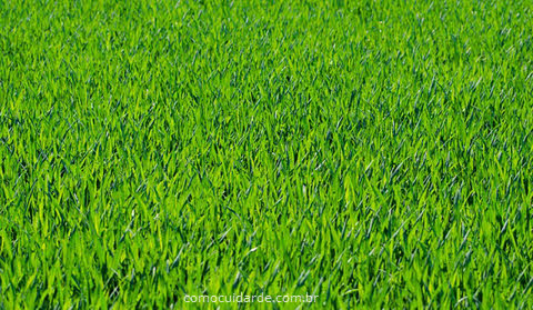 Como cuidar da grama