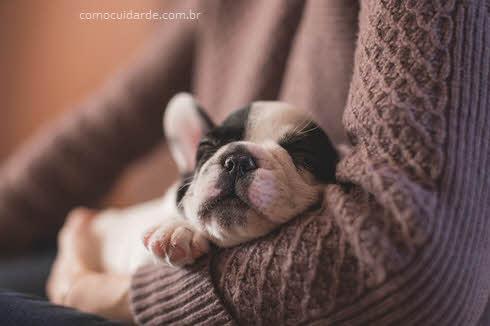 Como cuidar de doença de rins em cachorros
