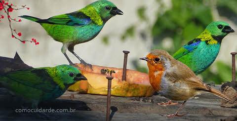 Como cuidar de passarinho