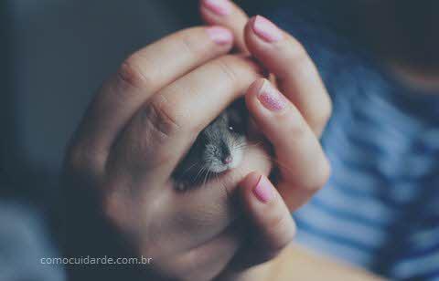 Como cuidar de hamster
