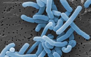 Como cuidar de lactobacilos vivos