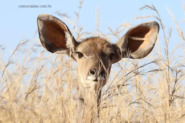Como cuidar de orelha inflamada