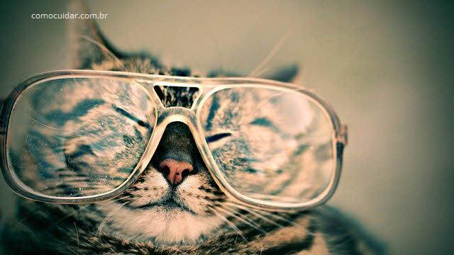 Como cuidar dos óculos