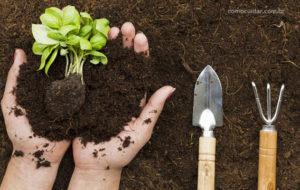 Tipos de solos para plantas, ácidos, calcários ou alcalinos, argilosos e arenosos
