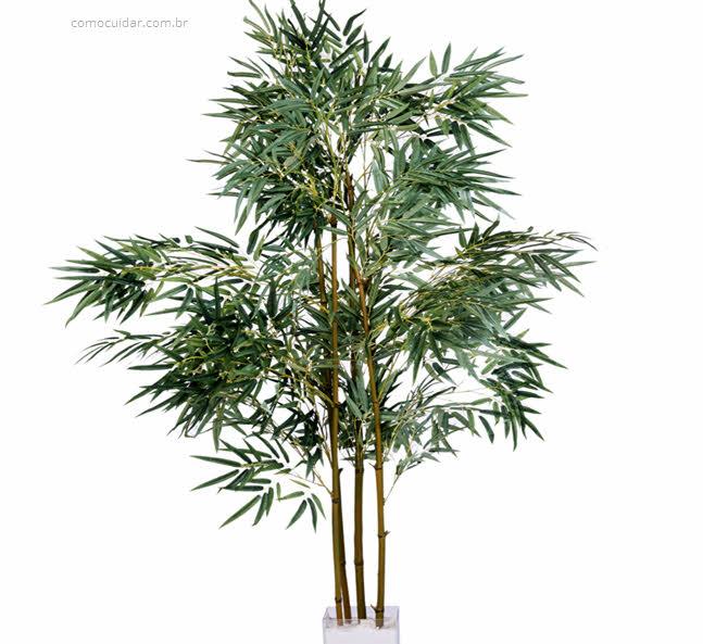 Como cuidar de areca bambu, Dypsis lutescens