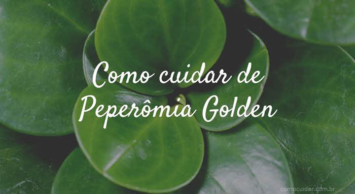 Como cuidar de Peperômia Golden