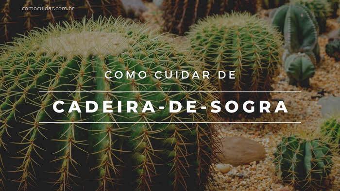 Como cuidar de cadeira-de-sogra, Echinocactus grusonii