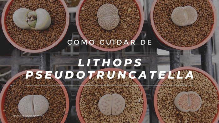 Como cuidar de Lithops pseudotruncatella