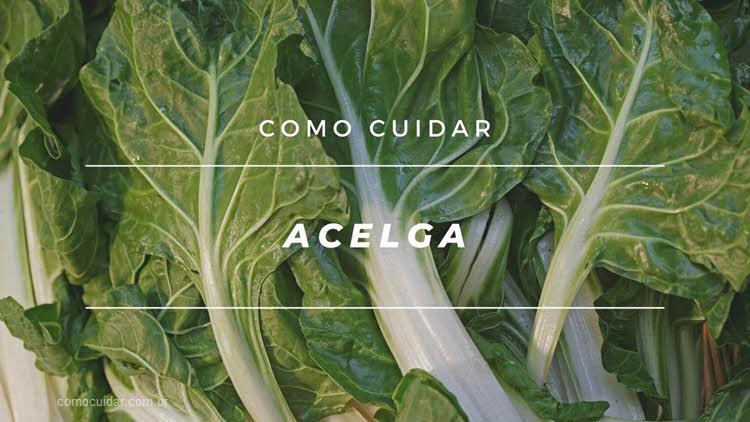 Como cuidar de acelga, Beta vulgaris cicla